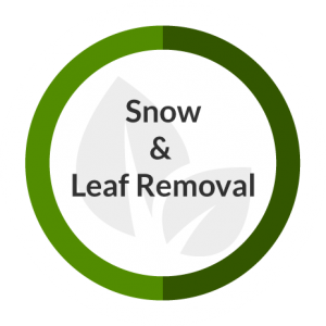 Snow_and_Leaf
